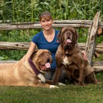 Valley Mastiff Rescue2