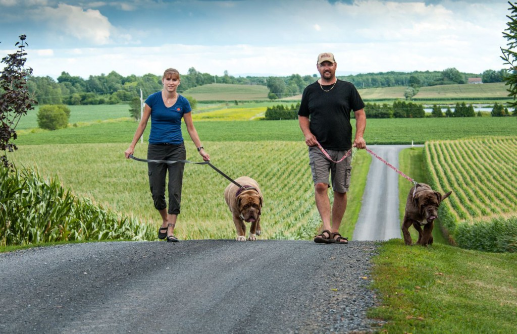 Valley Mastiff Rescue founder France Turcotte, left, and farmer Martin Renaud with a pair of rescue dogs.